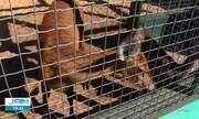 Animais silvestres invadem cidades fugindo das queimadas no Tocantins