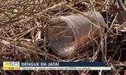 Crescimento do número de casos de dengue em Jataí deixa população em alerta