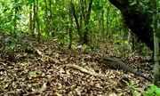 Projeto possibilita monitoramento de animais silvestres de forma remota