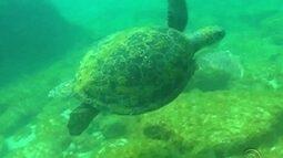 Reserva do Arvoredo tem belezas para serem contempladas até de baixo d'água