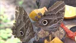 Conheça um borboletário no extremo sul que está atraindo turistas de várias partes do país