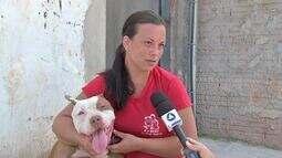 Cachorra é resgatada depois de passar 45 dias amarrada após ser abandonada