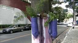 Vasinhos de flores terão de ser retirados de postes da Vila Madalena
