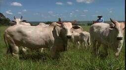 Encontro agropecuário reúne confinadores de gado em Santa Vitória