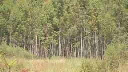 Por enquanto, áreas com Cadastro Ambiental Rural totalizam 42% em MS