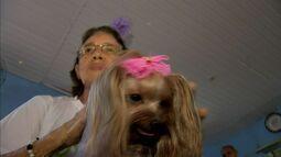 'Cãoterapia' ajuda pacientes em Fortaleza por meio de brincadeira com cachorros