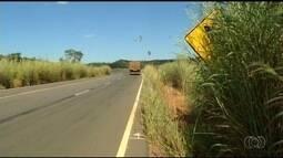 Mato alto e seco preocupa motoristas que passam pela GO-010