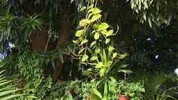 Aprenda a cuidar das plantas trepadeiras