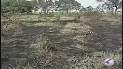 Estiagem e queimadas preocupam produtores e autoridades em Ituiutaba