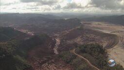 Minas Gerais é o estado que mais desmata área de Mata Atlântica no Brasil