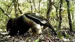 Vassununga protege espécies raras