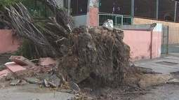 Uma semana após vendaval, árvores continuam caídas em Macapá