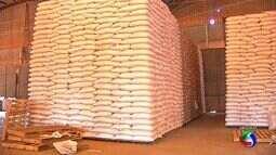 Preço elevado do milho não é a realidade que o produtor recebe