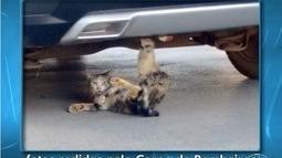 Bombeiros resgatam gato preso em carro em Montes Claros