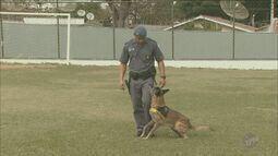 Polícia Militar de Piracicaba ganha reforço de seis novos cães para combate ao crime