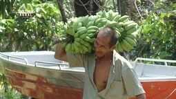 Conheça a história de um pai que deixou de ser madeireiro para se tornar agricultor