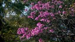 Época de floradas deixa a cidade mais bonita