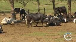 Atividade rural está sendo mapeada no Estado de SP