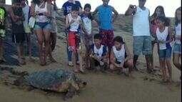 Soltura de tartaruga chama atenção de estudantes em Regência, Linhares, Norte do ES