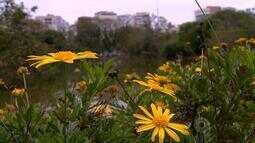 Tempo: setembro é marcado pelo começo da primavera