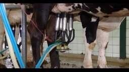Preço pago pelo litro do leite surpreende produtores do Triângulo Mineiro