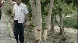 Árvores são condenadas após terem o caule arrancado em Linhares, ES