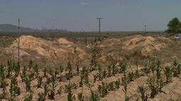Moradores da zona rural de Girau de Ponciano sofrem com estiagem em Alagoas
