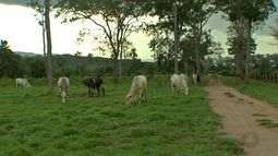 Modernização em fazendas aumenta os ganhos de pecuaristas