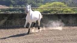 Região de Sorocaba é um dos mais importantes polos equestres do Brasil