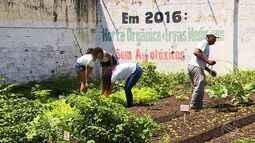 Rendimento escolar melhora com horta que ajuda na aula e na alimentação