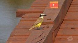 Ação do homem coloca em risco população de aves do Pantanal