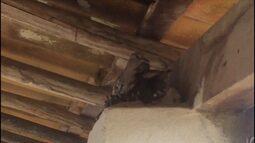 Passáros faz abrigo no telhado de uma casa no litoral norte do estado