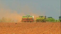 Produção de milho em MG deve chegar a cinco milhões de toneladas