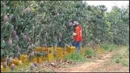 Projeto de irrigação de Jaíba passa por dificuldades durante a seca