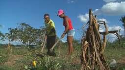 Bahia tem 93 municípios em situação de emergência por causa da seca