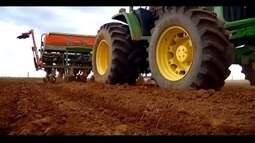 Produtores de milho do Triângulo Mineiro apostam em clima e aumentam área plantada