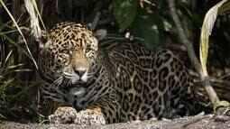 Reportagem revela riquezas do Pantanal