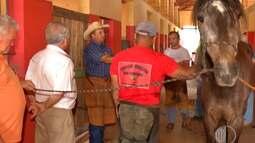 Curso de Equideocultura é disponibilizado para tratadores em Mogi das Cruzes