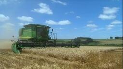 Preço do trigo provoca insatisfação dos produtores do grão no RS