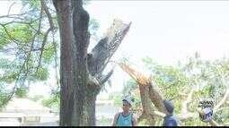 Homem é atingido ao podar árvore e morre prensado por galho em Alfenas (MG)