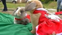 Criador de Mogi vende coelhos com roupinhas