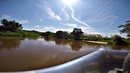 Um pantanal só de São Paulo
