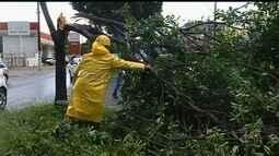 Chuva com ventos de 80 km/h derruba mais de 100 árvores em Catalão
