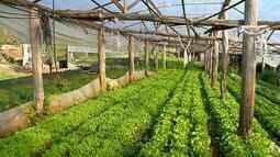 Feiras ecológicas e o aumento na procura incentiva a produção de alimentos orgânicos