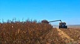 Tempo favorável e boa produtividade animam agricultores