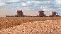 Com boa safra, produtores da região Oeste ficam de olho nos preços