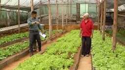 Produtor rural de Coronel Fabriciano aposta em alimentos sem agrotóxicos