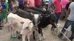 Criadores de animais sofrem com estiagem no Agreste de Pernambuco