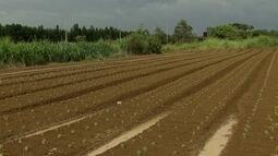 GDF anuncia medidas para reduzir consumo de água dos agricultores de Brazlândia