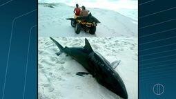 Tubarão é encontrado por banhistas em Arraial do Cabo, no RJ